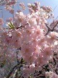 2005-04-09saku