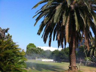 真夏の植物園